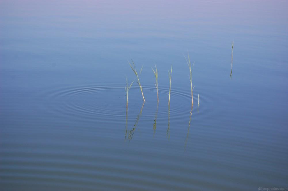 Reed-ripple1852