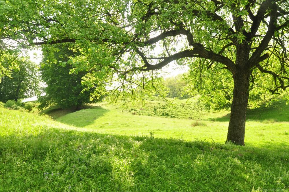 Spring-forest-sunshine-5718